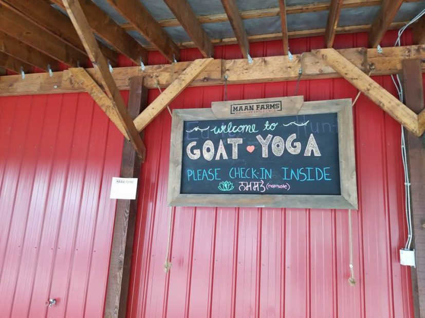 Goat Yoga sign