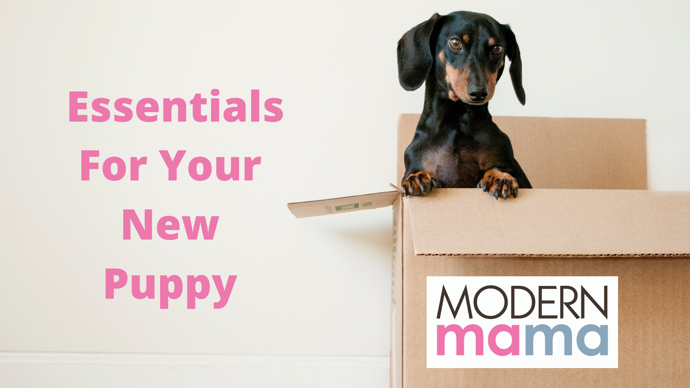 Essentials For Your New Puppy