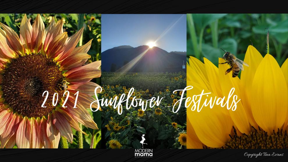 2021 Sunflower Festivals in BC