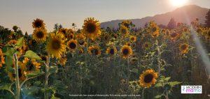 Cultas Lake Flower Fest