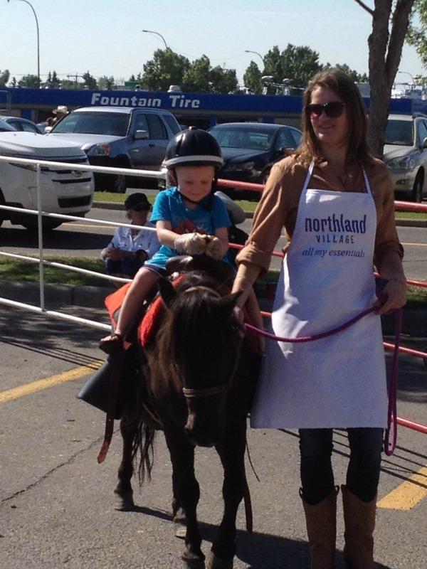 northland caravan pony