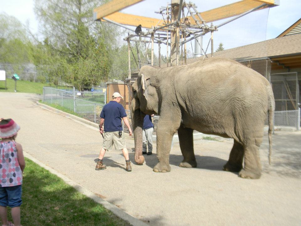 Valley Zoo