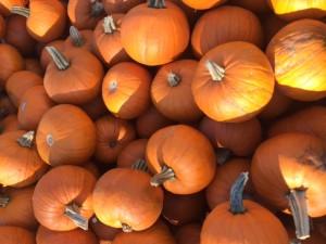 PG Pumpkins