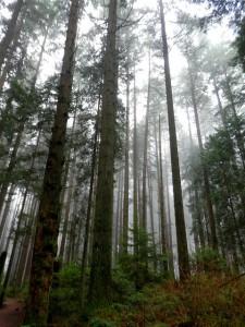 vancouver hikes pacific spirit ubc