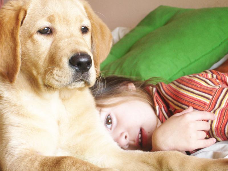 vancouver pet adoption