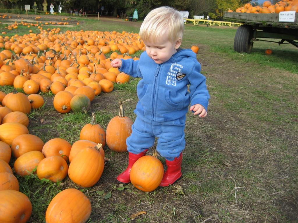 metro vancouver pumpkin patches laity farm