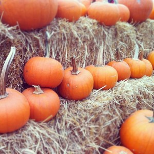 metro vancouver pumpkin patches