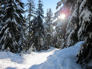 Vancouver winter snowshoeing